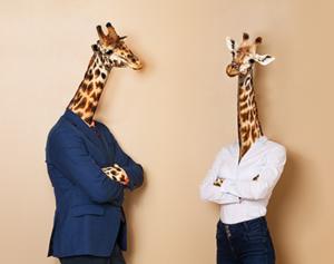 Office-Giraffes-small